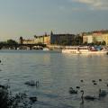 """Vltava nebo také """"Labutí řeka"""". Už jste také měli možnost labutě na Vltavě potkat? 😍 . . . . . . . . . #rekavltavaig …"""