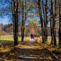 Kam jinam v této době... než do přírody? 👣  #rekavltavaig #rekavltava #vltavariver #vltavariverig #usek1ig #sumavsko