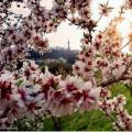 Praha už nám také kvete 😍🌸 . . Foto: 📸 @zuzana.svadlenkova . . #rekavltava #rekavltava #vltavariverig #vltavariver …
