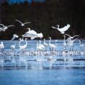 Znáte přírodní rezervaci Vrbenské rybníky? 🤓   ☝️ Rezervace leží na okraji Českých Budějovic, zahrnuje 4 velké rybníky…